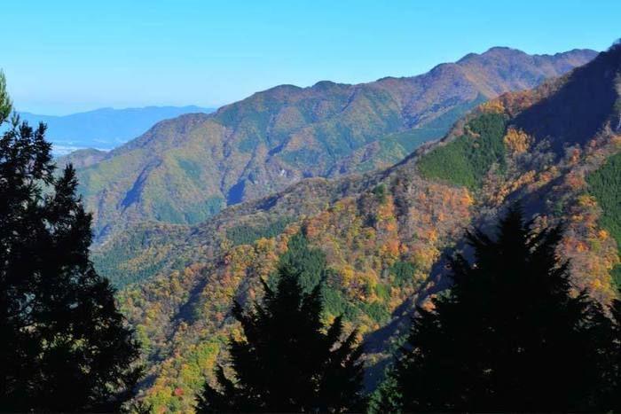 秩父の紅葉した山の写真