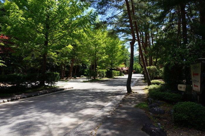 奥飛騨温泉郷の緑豊富な道の写真