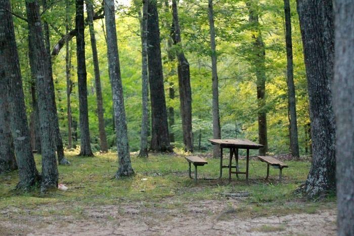 自然の中にあるテーブルとベンチの写真