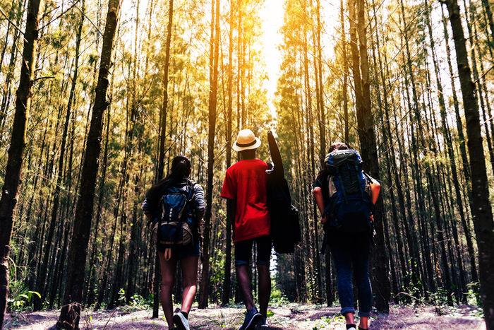 林の中を歩いている3人の男性