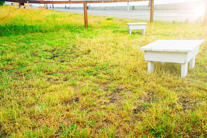 芝生の上に置いてあるサイドテーブルの写真