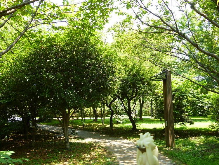 日中の木場公園