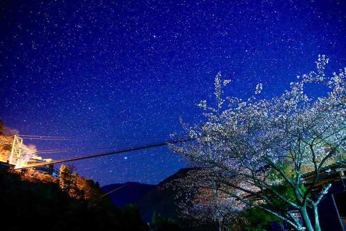 夜空の下のつり橋と桜