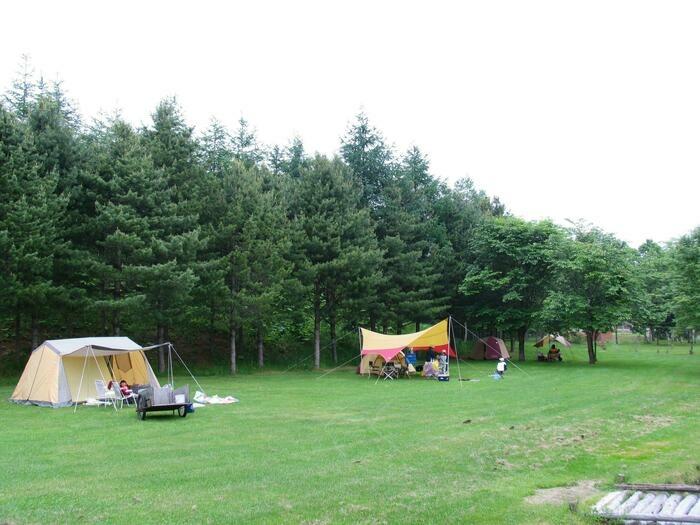 背後が林の芝生に建つ2張のテント