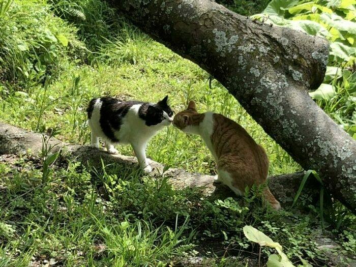 犬猫34匹に会える千葉のオートキャンプ場「花はなの里」。ファン続出の理由を体感【取材】