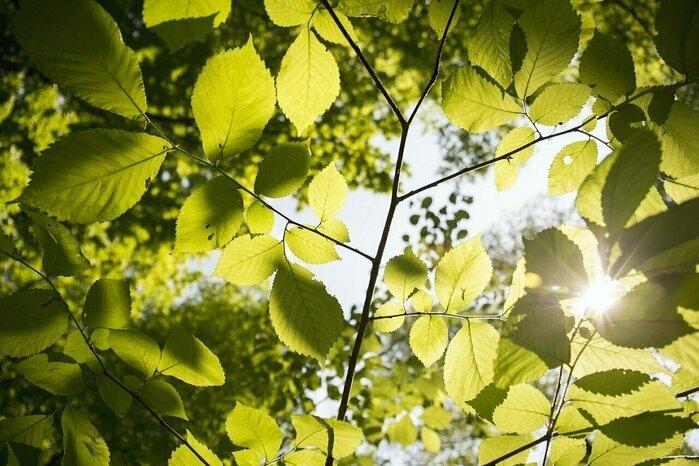 日差しを受けている木の葉