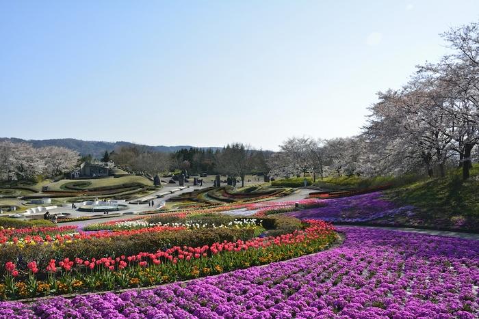 国営みちのく杜の湖畔公園の花