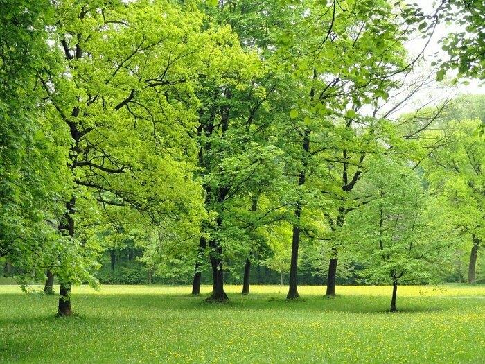 草や木が緑豊かな公園原っぱ