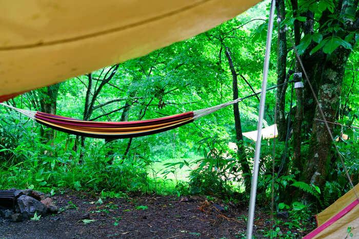 キャンプでハンモックを木に吊るしている画像