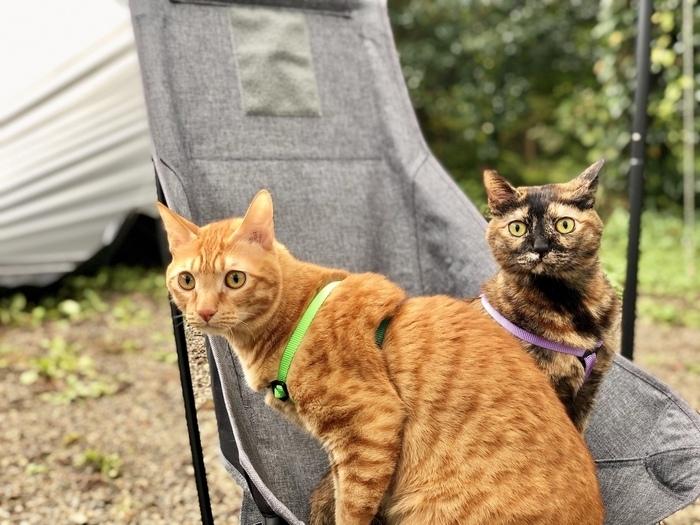 飼い猫とキャンプ