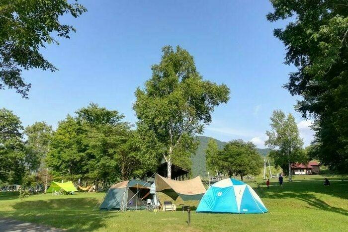 ニニウキャンプ場のテントサイトの画像
