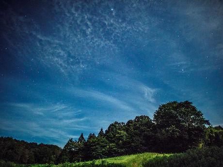 満天の星空と木々