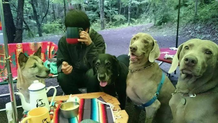たくさんの犬に囲まれキャンプを楽しむ男性