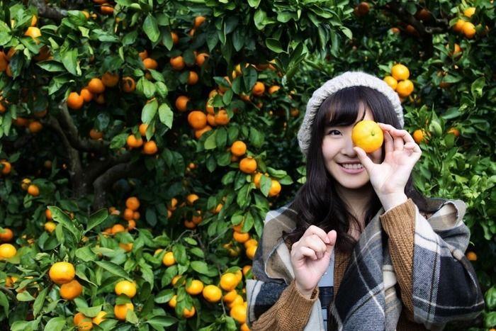千葉県南房総市、みかん農園「三平まさのぶ農園」でみかん狩りをする女性