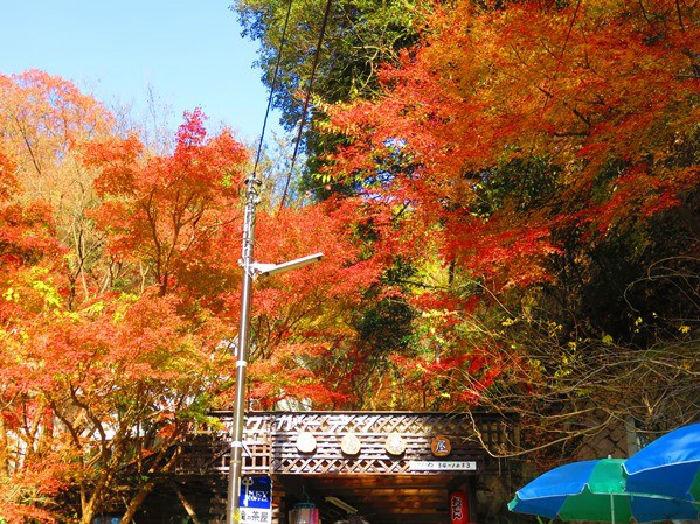 高座の滝の紅葉