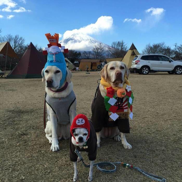 キャンプ場でお正月のコスプレ青して座る犬たち