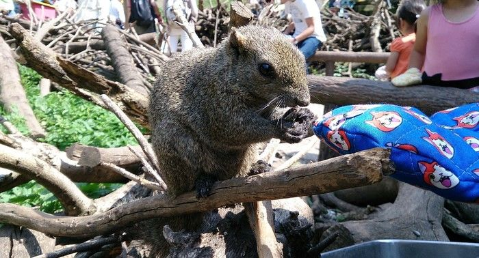 町田リス園のリスが餌を食べている写真