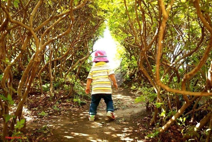 木々のトンネルの中を歩く子供