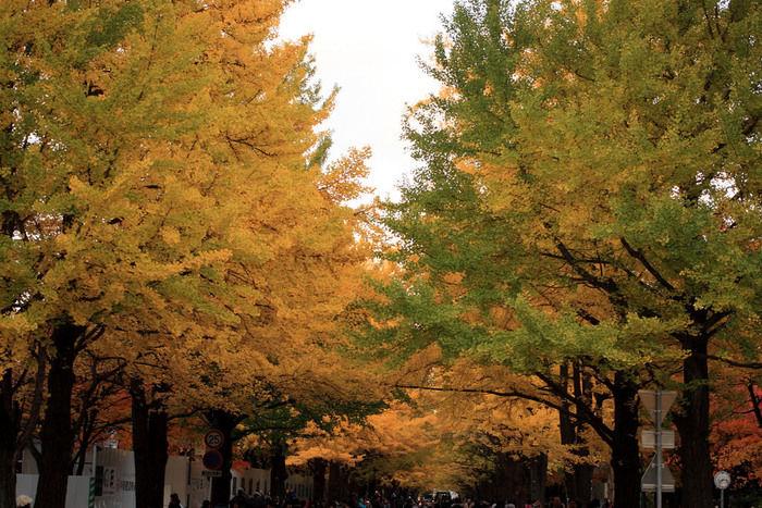 紅葉した並木道