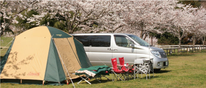 桜の下に停めたワゴン車とテント