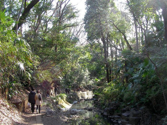 等々力渓谷公園の散歩コースを歩くカップル