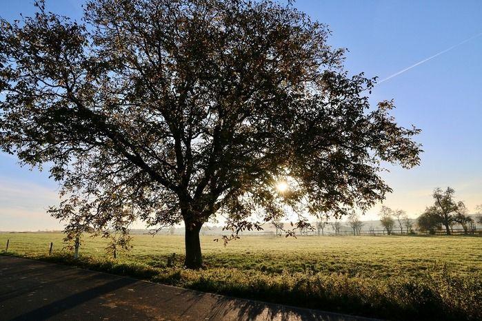 広大な芝生と大木