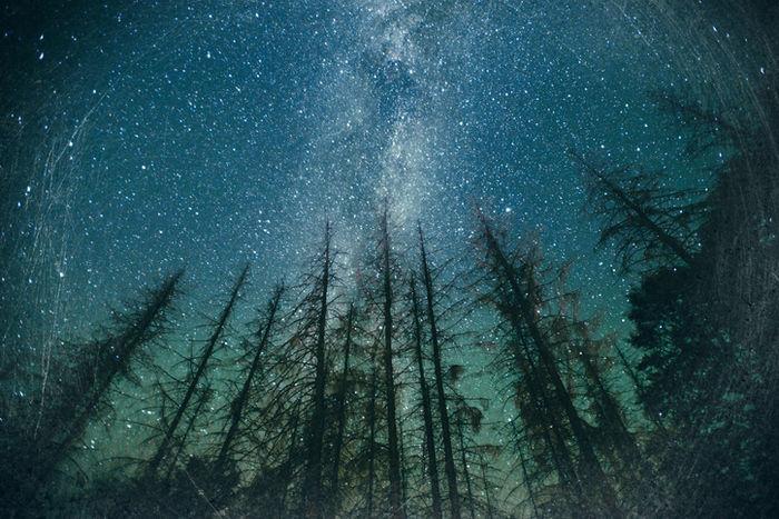 林から見える星空