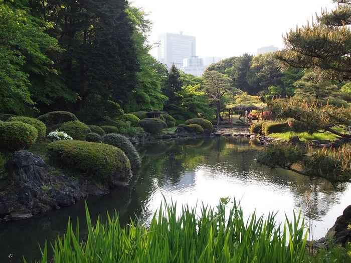 新宿御苑の池