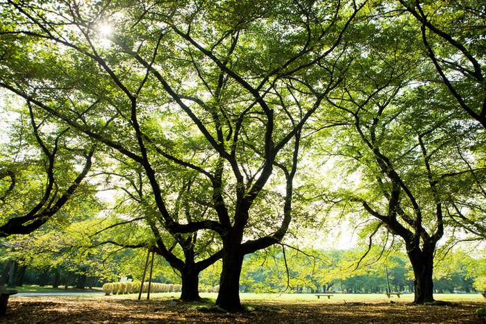 小金井公園の木漏れ日