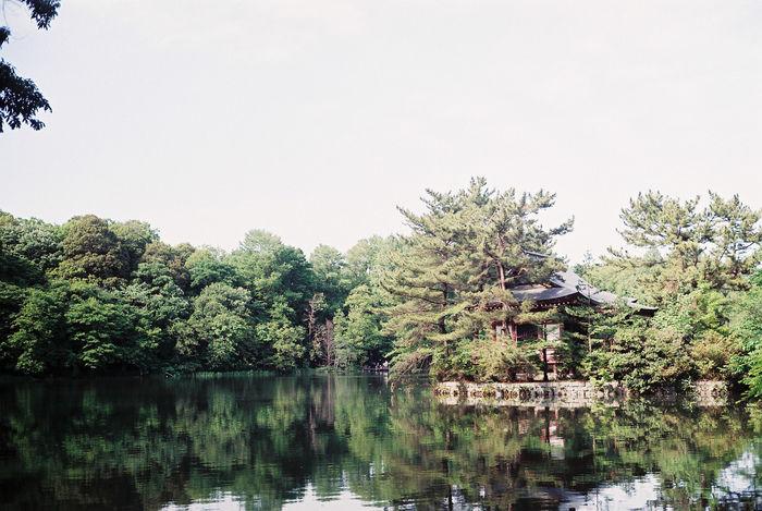 石神井公園園内の池の様子