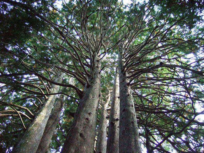 奥津軽トレイルの壮大な自然