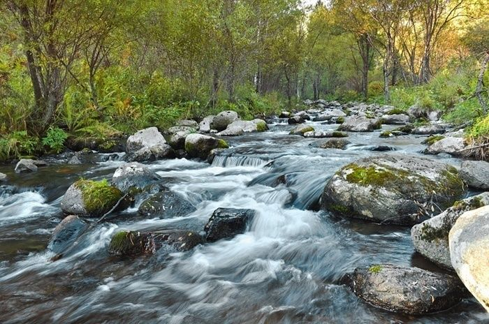 山を流れる川