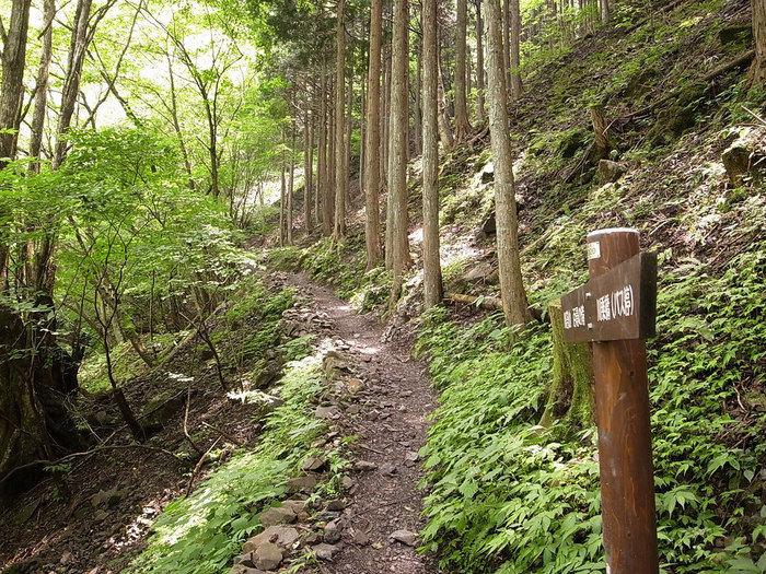 川苔山の山道