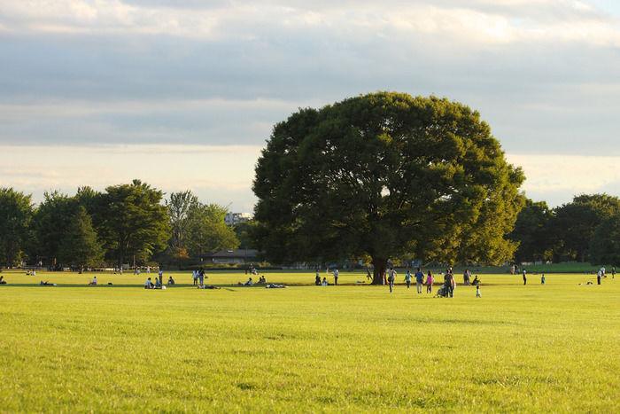 昭和記念公園の広大な芝生でピクニックをする人々