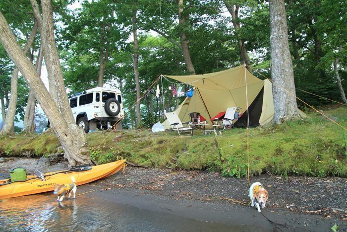 キャンプサイトと駆け回る犬