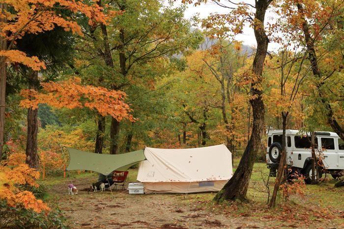 紅葉した林間でキャンプを楽しむ様子