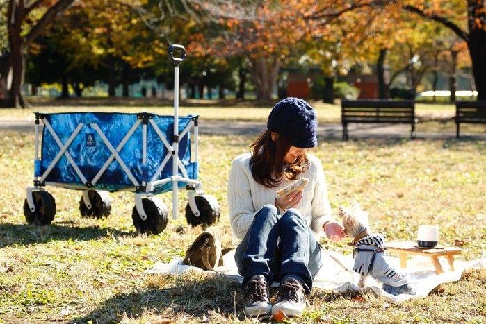 犬と一緒にピクニック