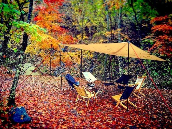 紅葉の中にセッティングされたテーブルと6脚の椅子