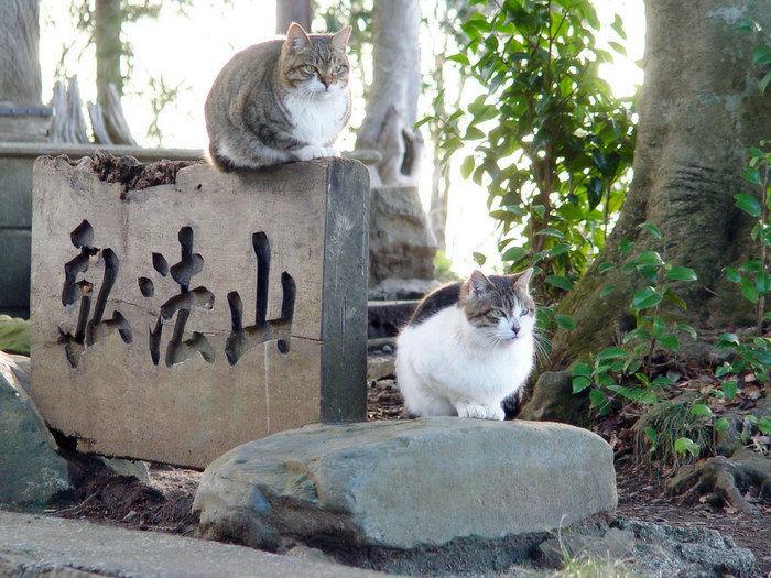 弘法山で佇む猫
