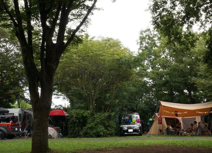 有野実苑オートキャンプ場のキャンプサイト