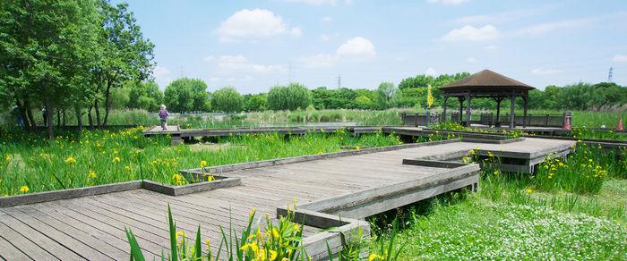 舎人公園の園内の様子の写真