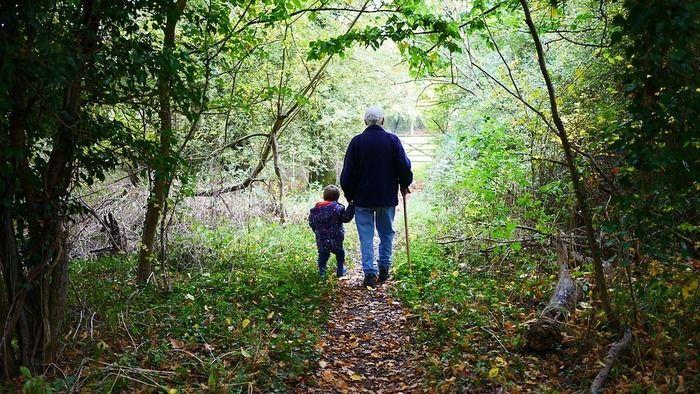 森を散歩するおじいちゃんと孫の後ろ姿